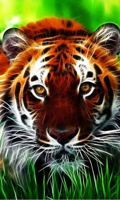 Картинка бенгальский тигр » индия » страны » картинки 24 скачать.